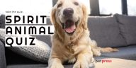 Spirit Animal Quiz | Featured Dog