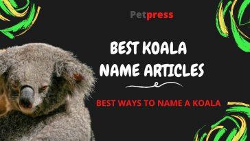 koala-name-articles