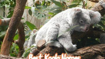 best-koala-names