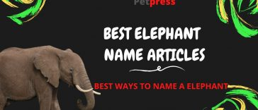 elephant-name-articles