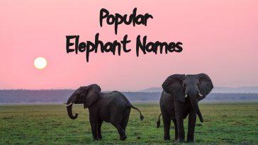 popular-elephant-names