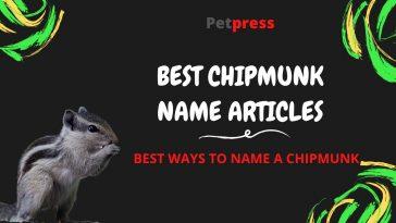 chipmunk-name-articles