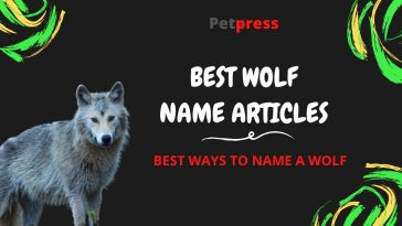 wolf-name-articles
