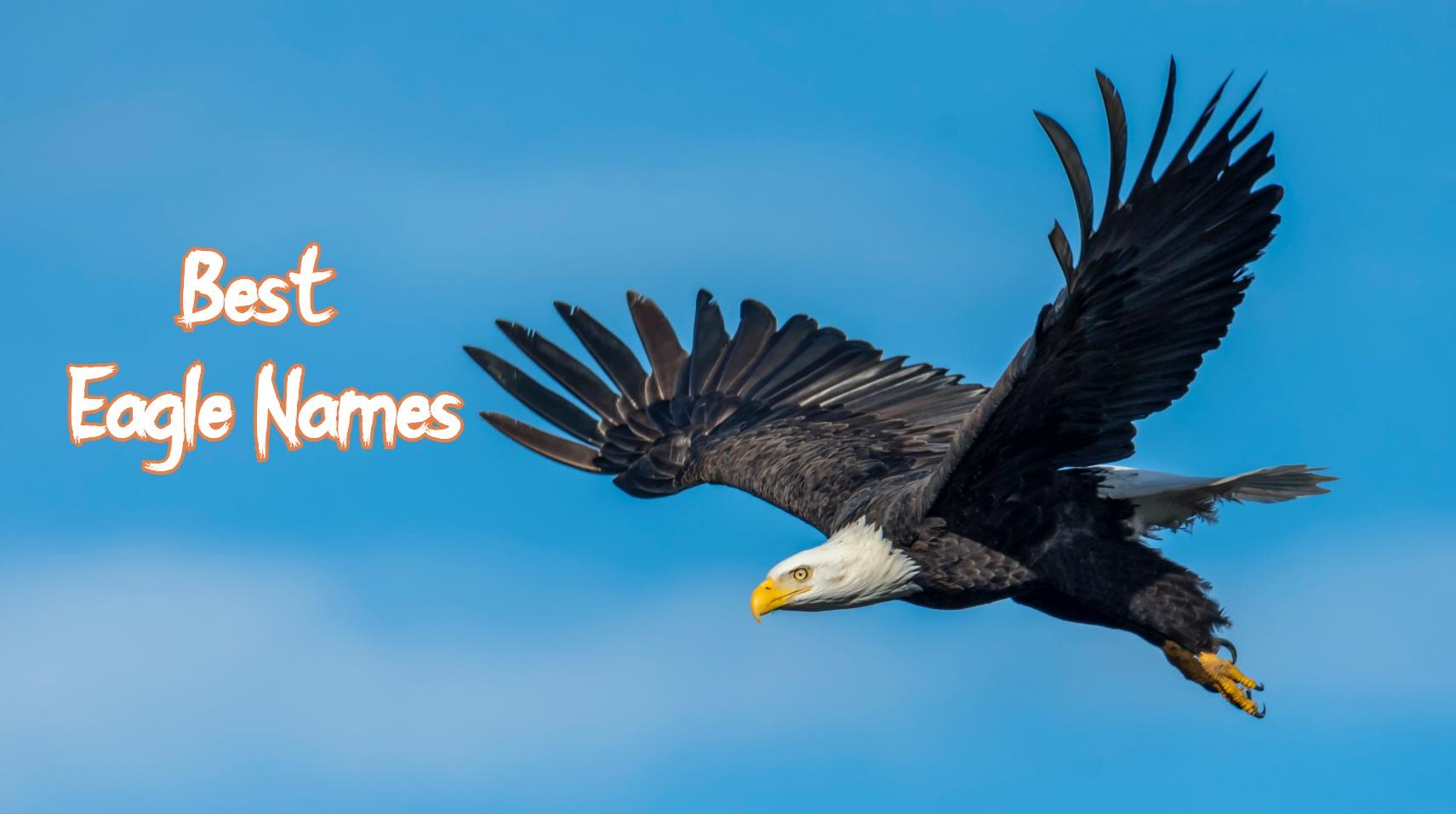 eagle-names