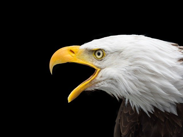 male-eagle-names