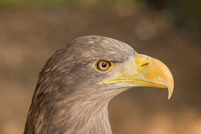 female-eagle-names
