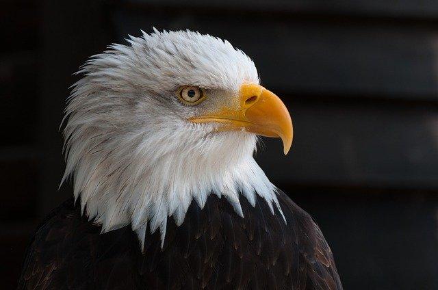 famous-eagle-names