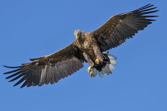 cool-eagle-names
