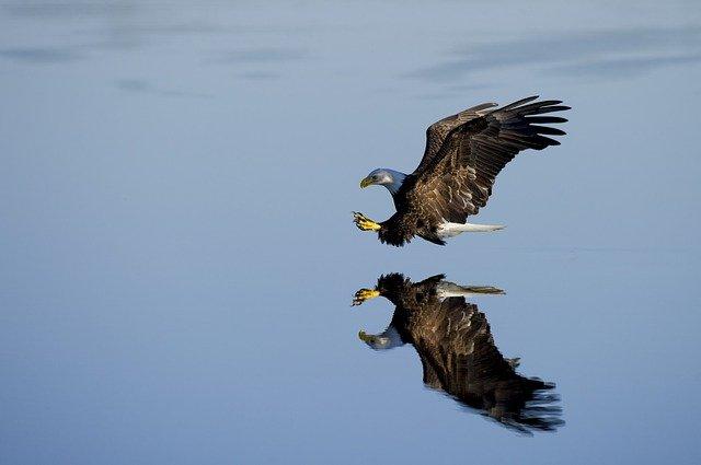 sea-eagle-names