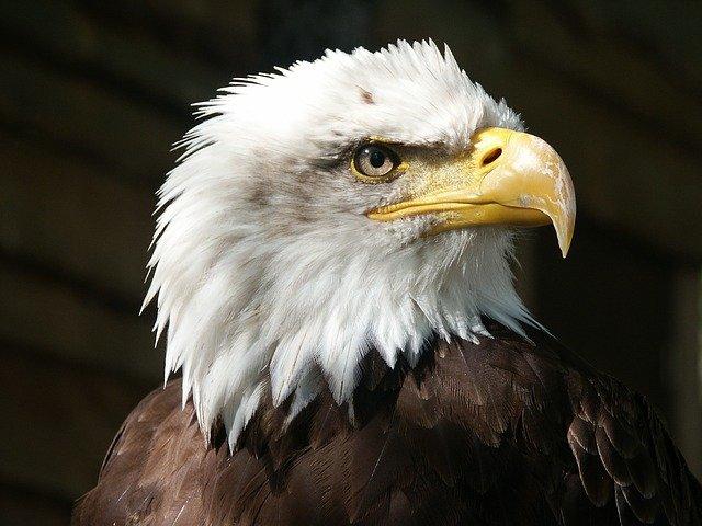 funny-eagle-names