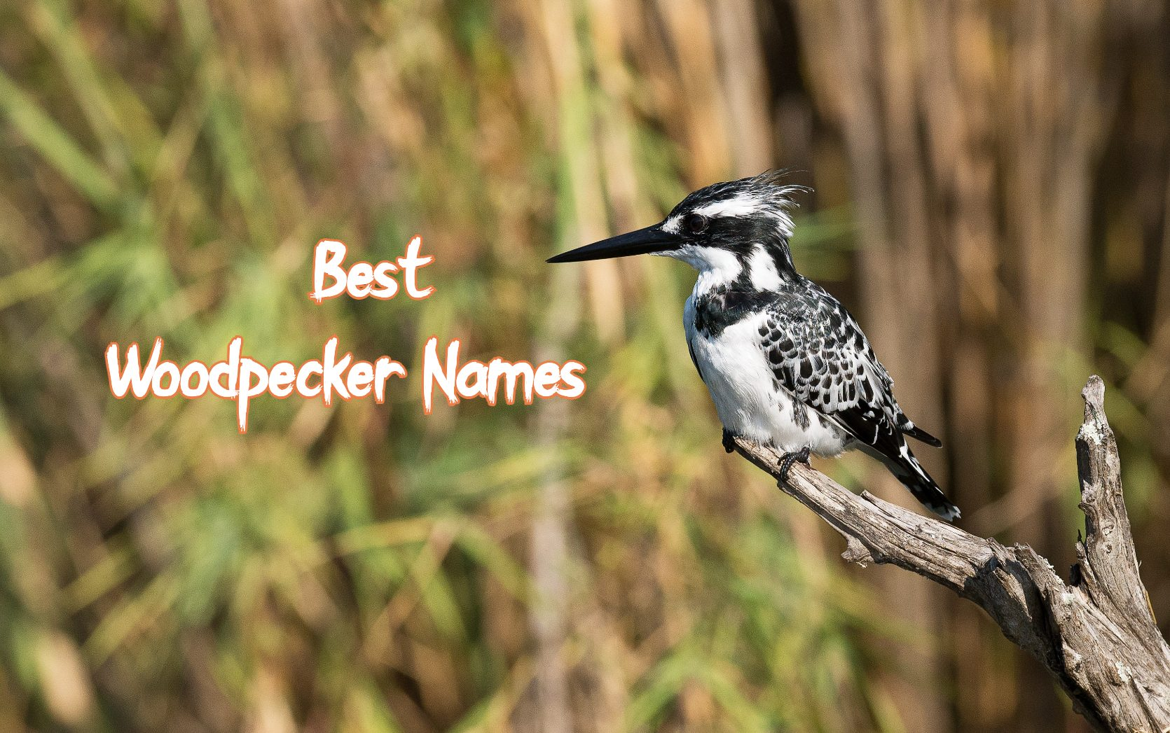 best-wood-pecker-names
