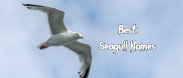 best-seagull-names