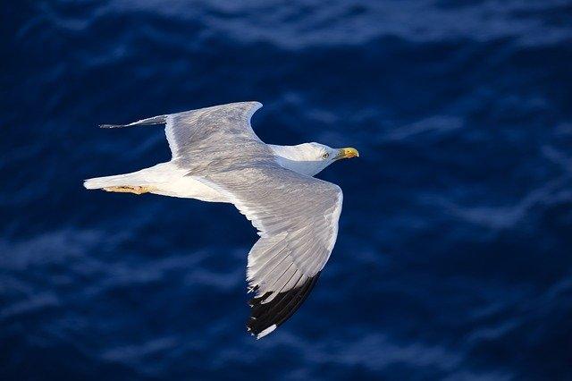 boy-seagull-names