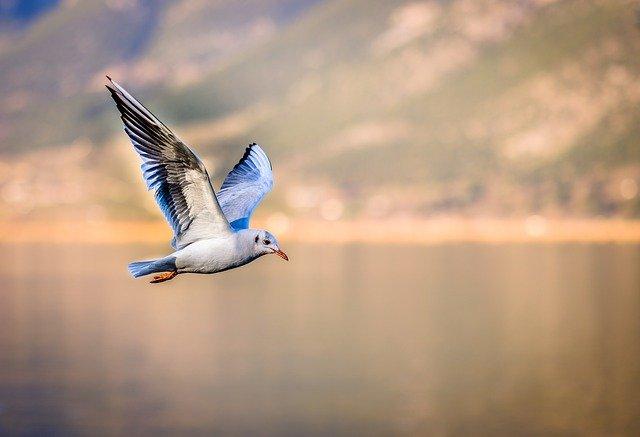girl-seagull-names