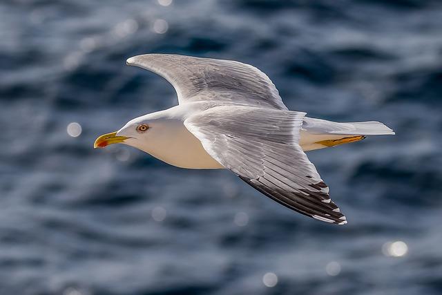 funny-seagull-names