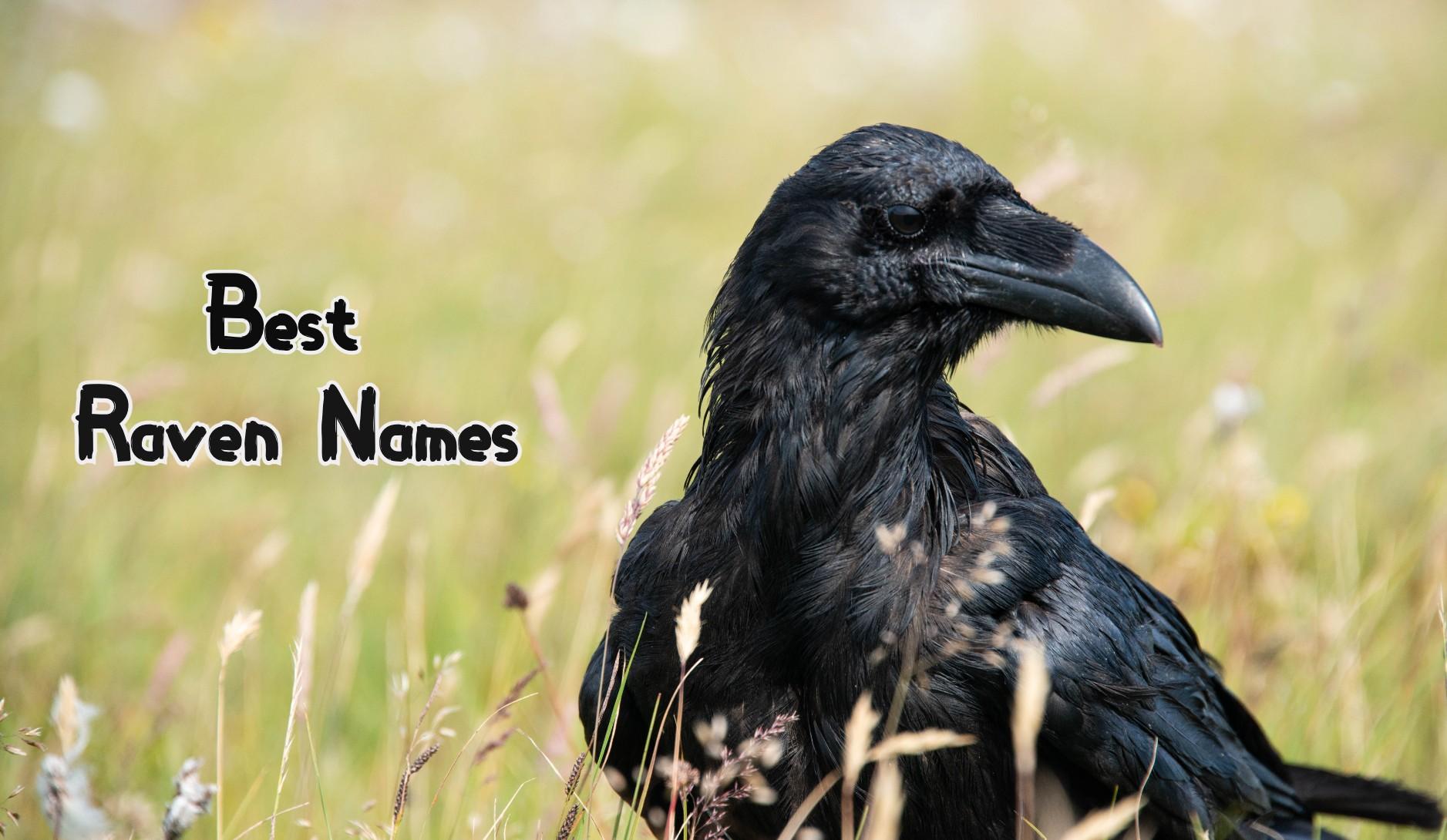 best-raven-names