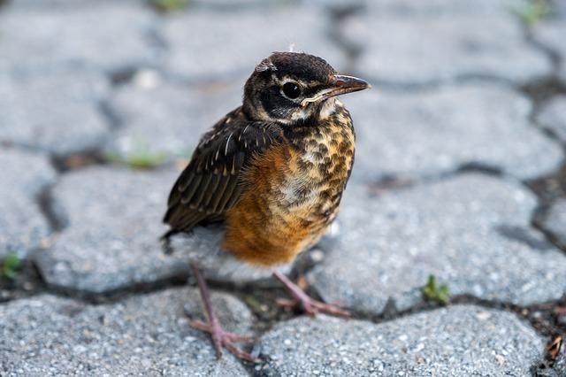 baby-boy-sparrow-names