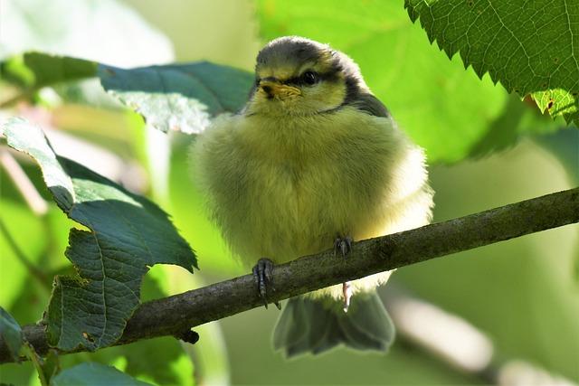 baby-girl-sparrow-names