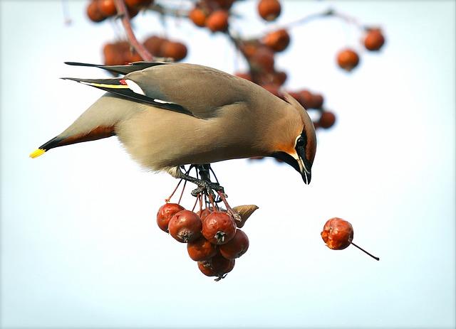 popular-sparrow-names