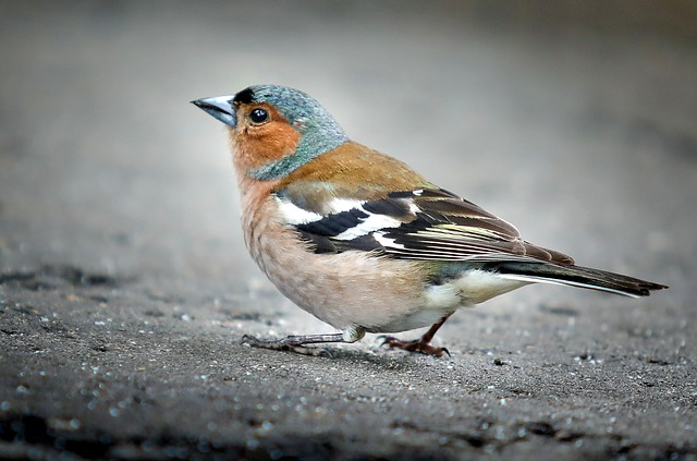 sparrow-nicknames
