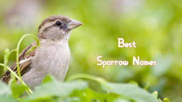 best-sparrow-names