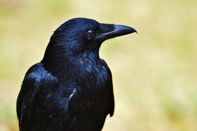 female-raven-names
