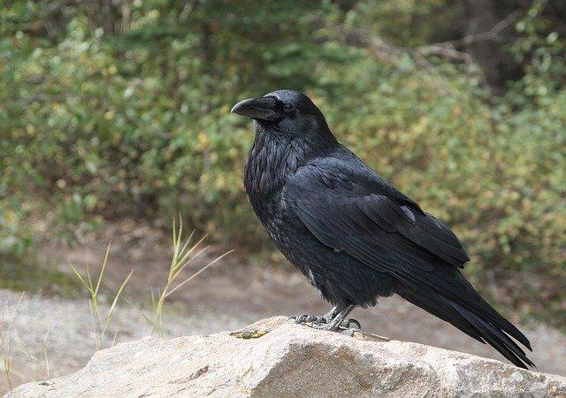 cool-raven-names