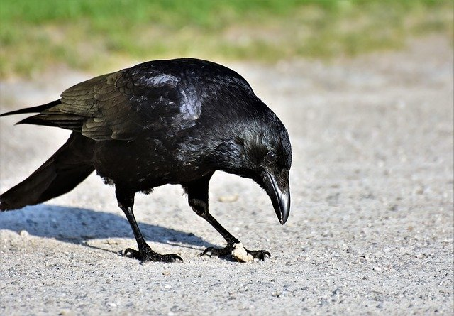 funny-raven-names