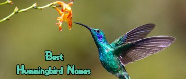 best-hummingbird-names