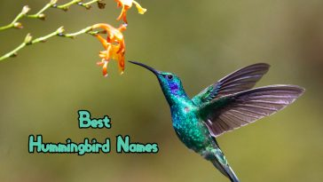 best-hummingbird-names