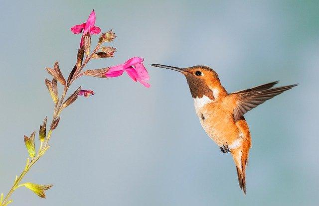 female-hummingbird-names