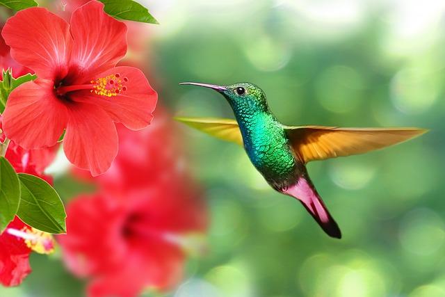 cute-hummingbird-names