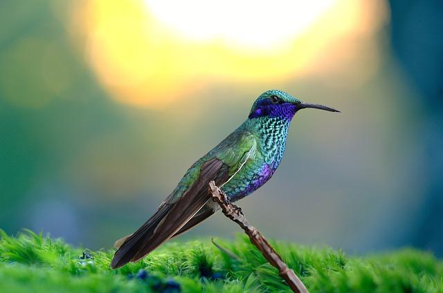 cool-hummingbird-names