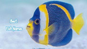 best-fish-names