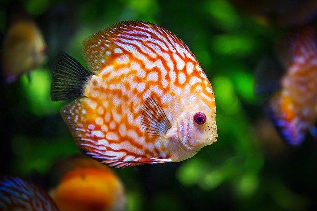 boy-fish