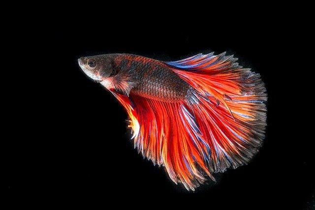 cool-fish