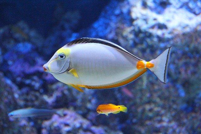 cute-fish