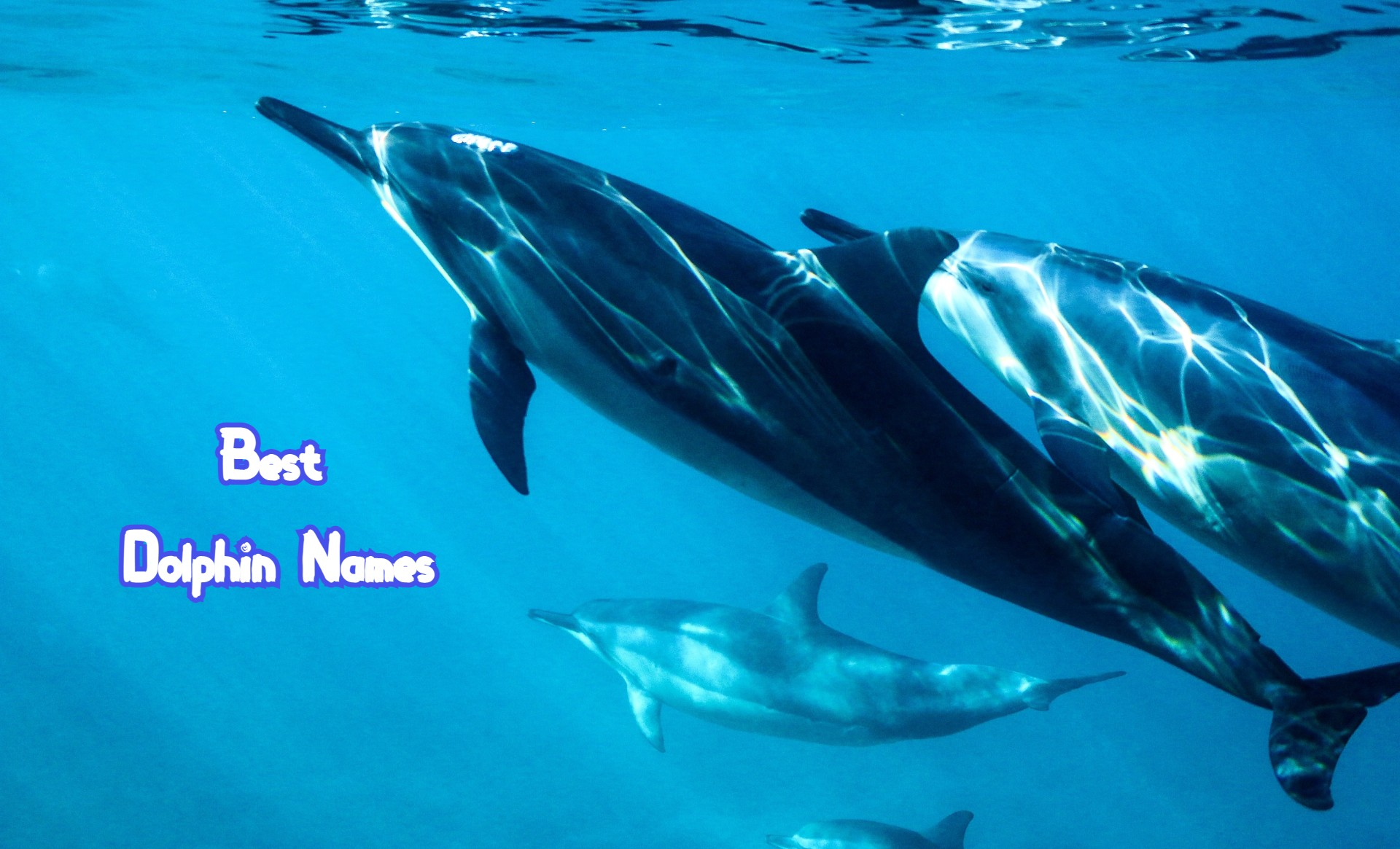 best-dolphin-names