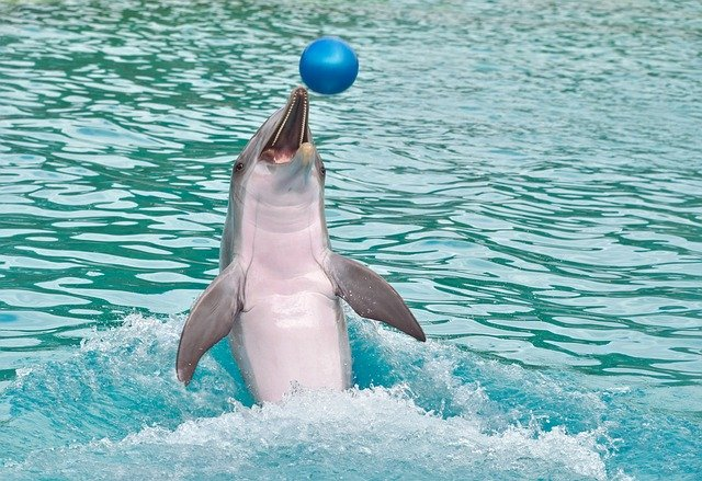 baby-boy-dolphin