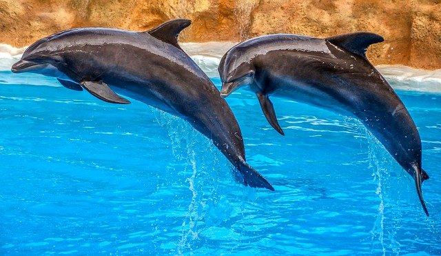 seaworld-dolphins-names