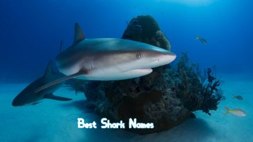 best-shark-names