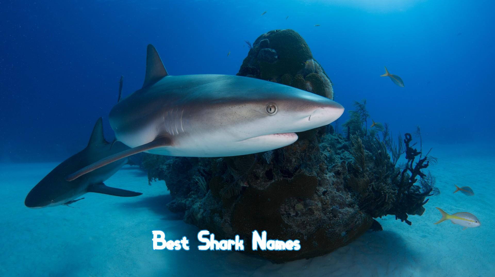 best-shark-names