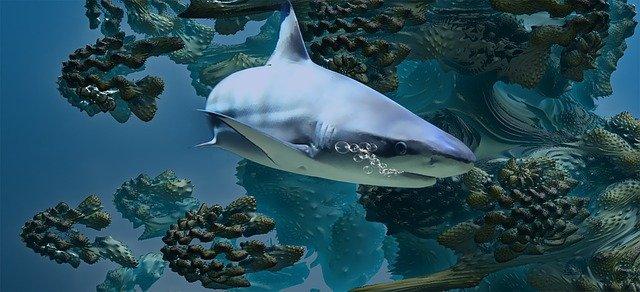 famous-shark
