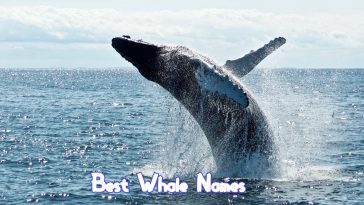 best-whale-names
