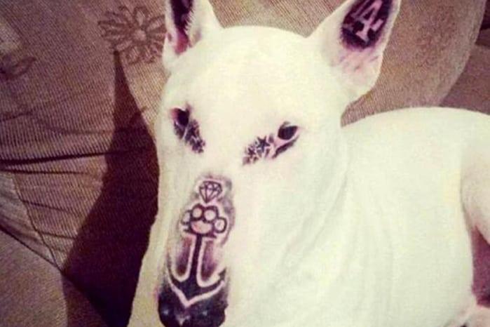 dog with bad tattoos