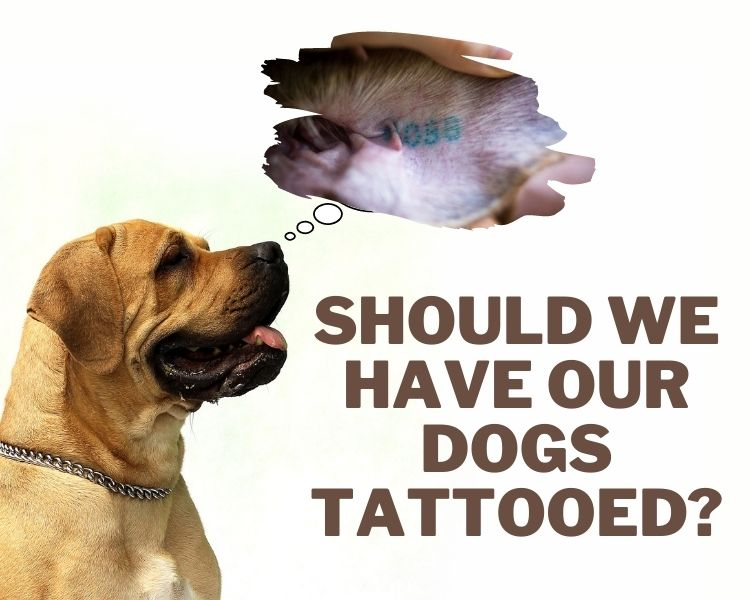 is it illegal to have a dog tattooed