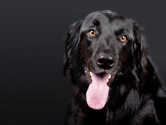 kannada-dog-names