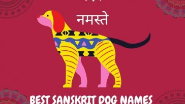 best sanskrit dog names for both male and female