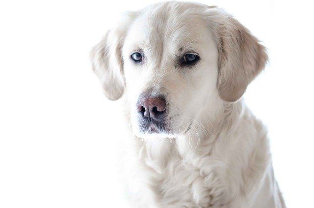 bengali-female-dog-names