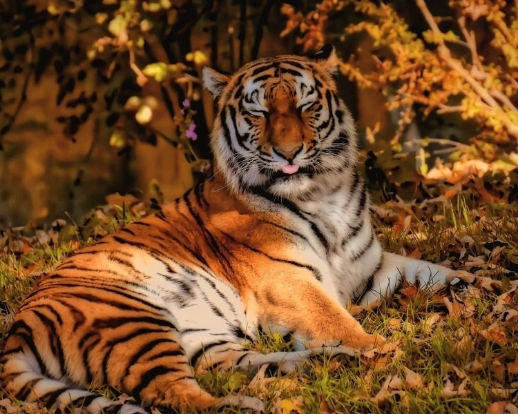 tiger name generator for a large female tiger